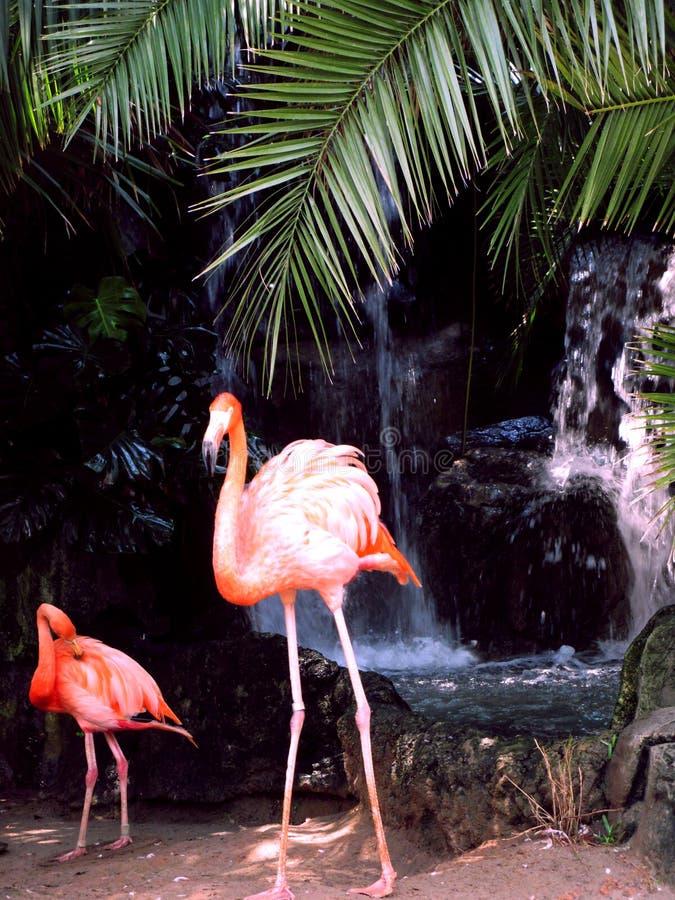Flamingo's voor Waterval royalty-vrije stock foto