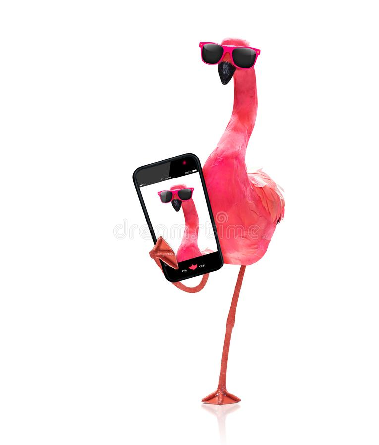 Flamingo som tar en selfie royaltyfri foto