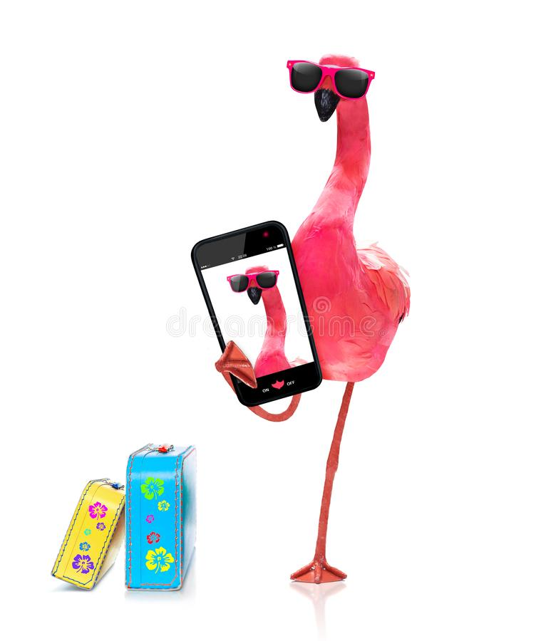 Flamingo som tar en selfie royaltyfri bild