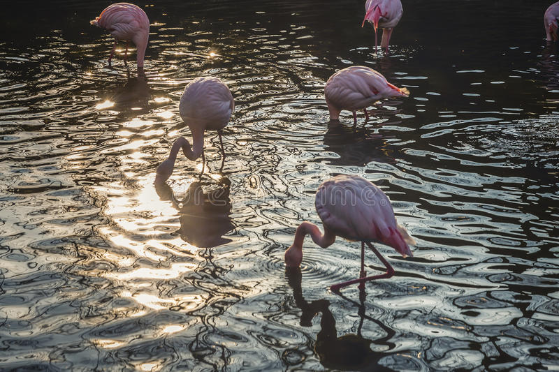 Flamingo Standing On Water During Daytime Free Public Domain Cc0 Image