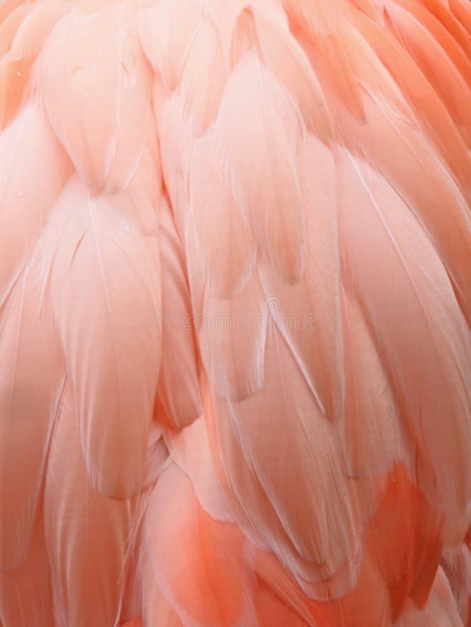 flamingo tła różowy obraz royalty free