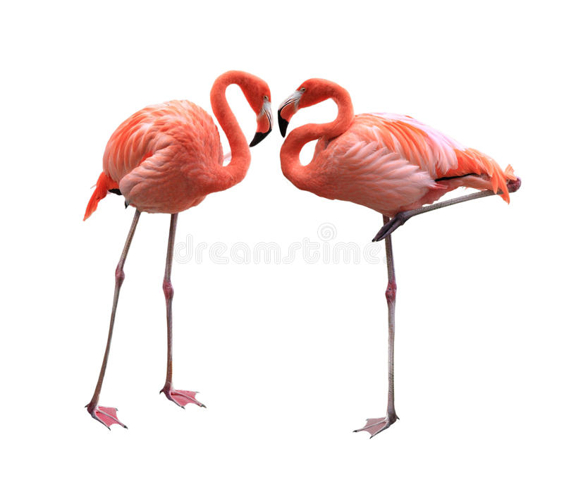 Flamingo twee royalty-vrije stock foto's