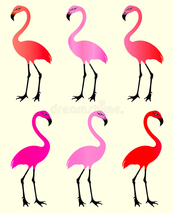 flamingo 6 variazioni di colore fotografia stock libera da diritti