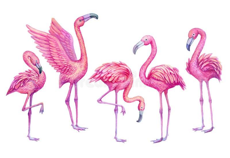 Flamingo watercolor tropical set. Exotic paradise birds illustration. stock illustration