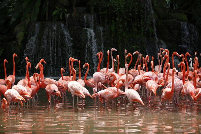 Download Flamingo with waterfall stock image. Image of pink, prey - 28632245