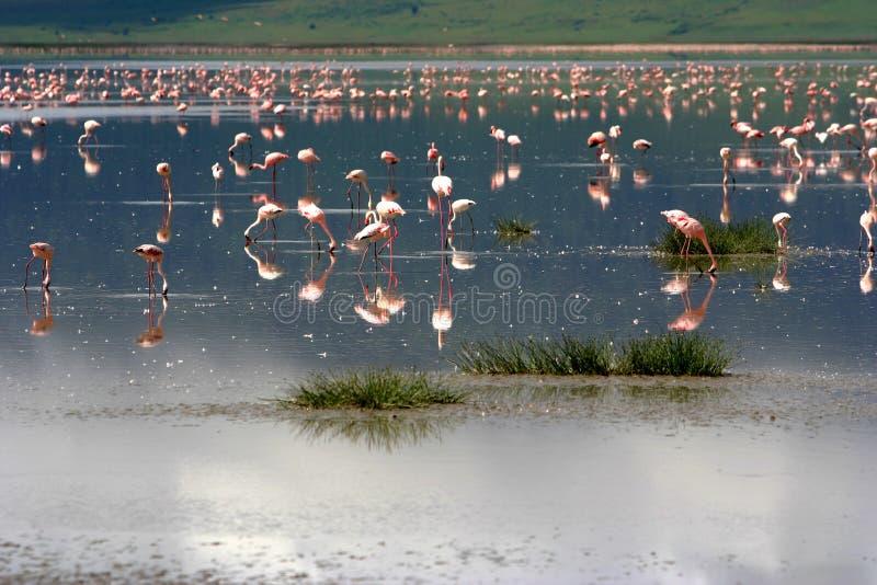 flamingoes στοκ εικόνα