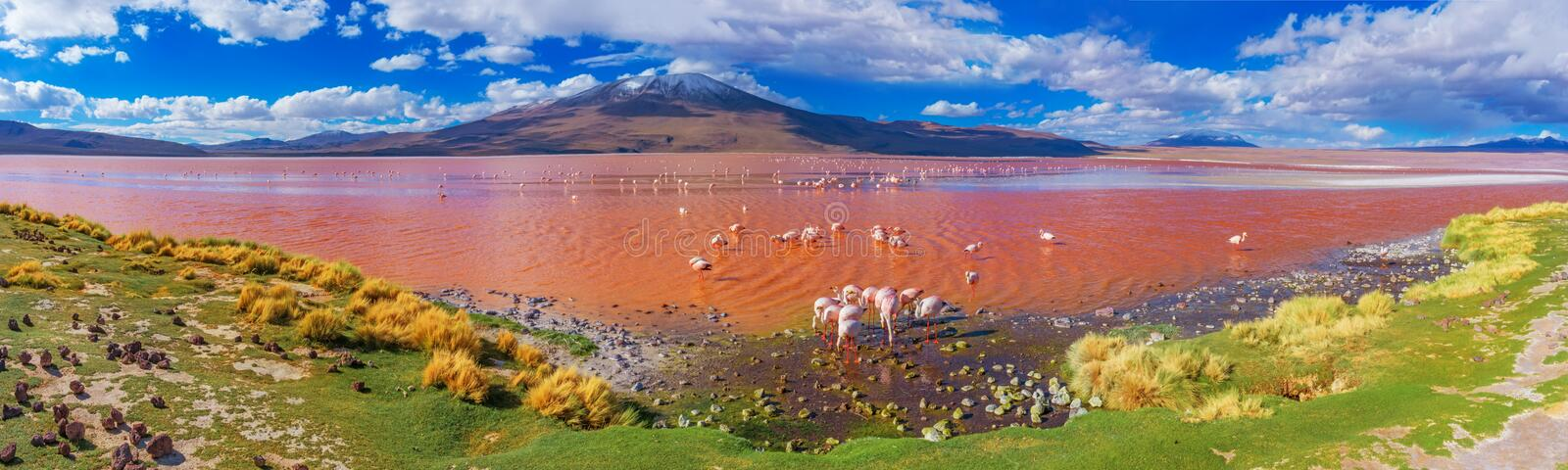 Flamingoes in Laguna Colorada, Bolivië royalty-vrije stock foto's