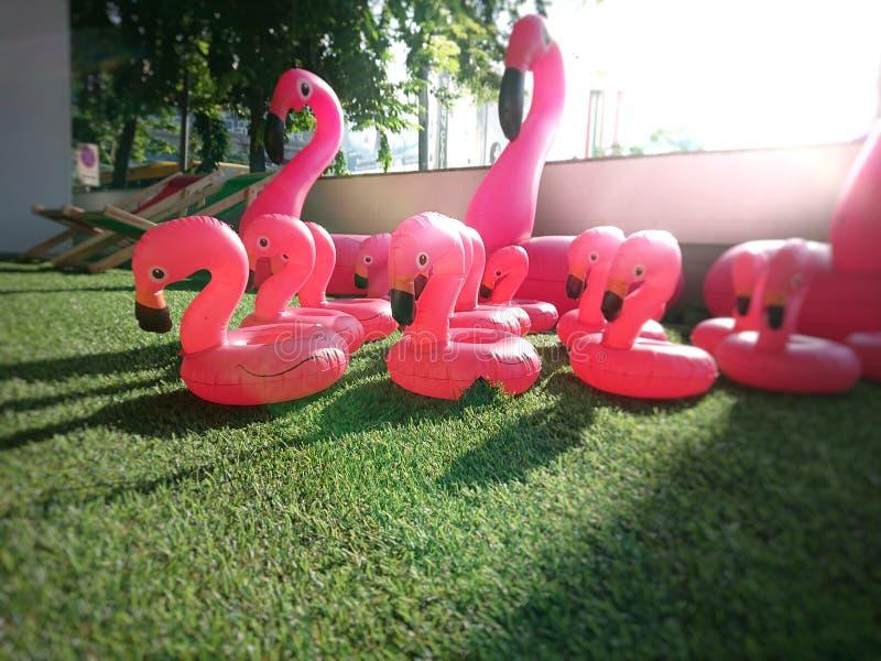 Flamingogummiring auf nachgemachtem Gras lizenzfreie stockfotos