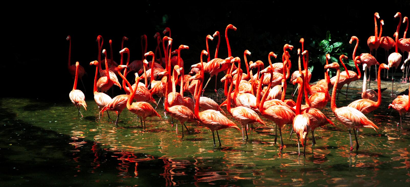 flamingolake royaltyfri foto