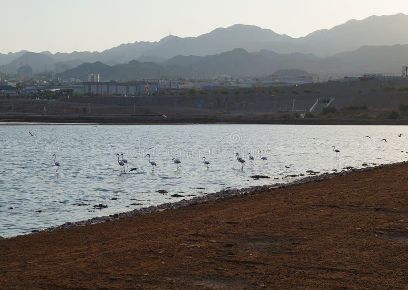 Flamingoreste im birding Park stockfotografie