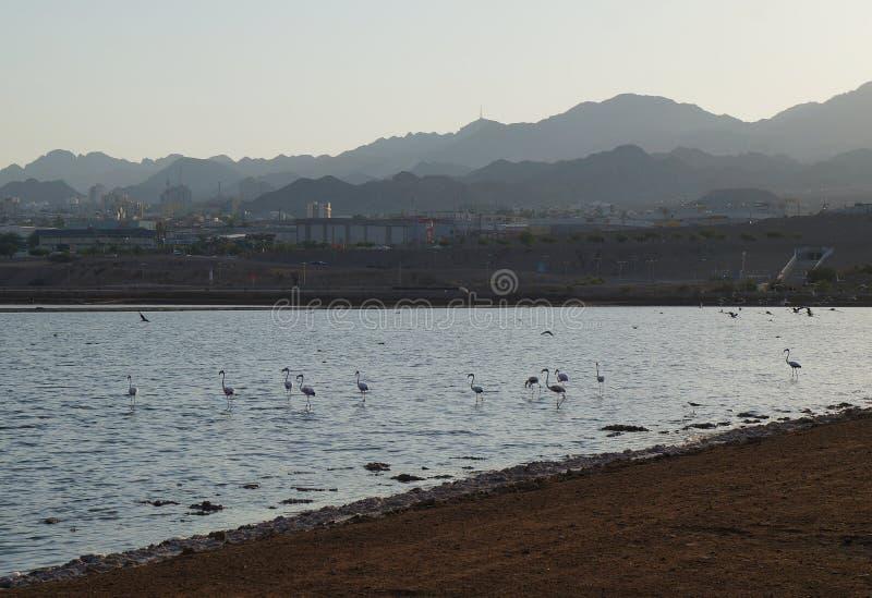 Flamingoreste im birding Park stockfoto