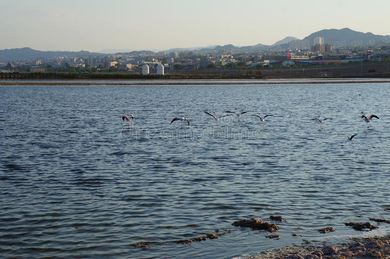Flamingoreste im birding Park stockfotos