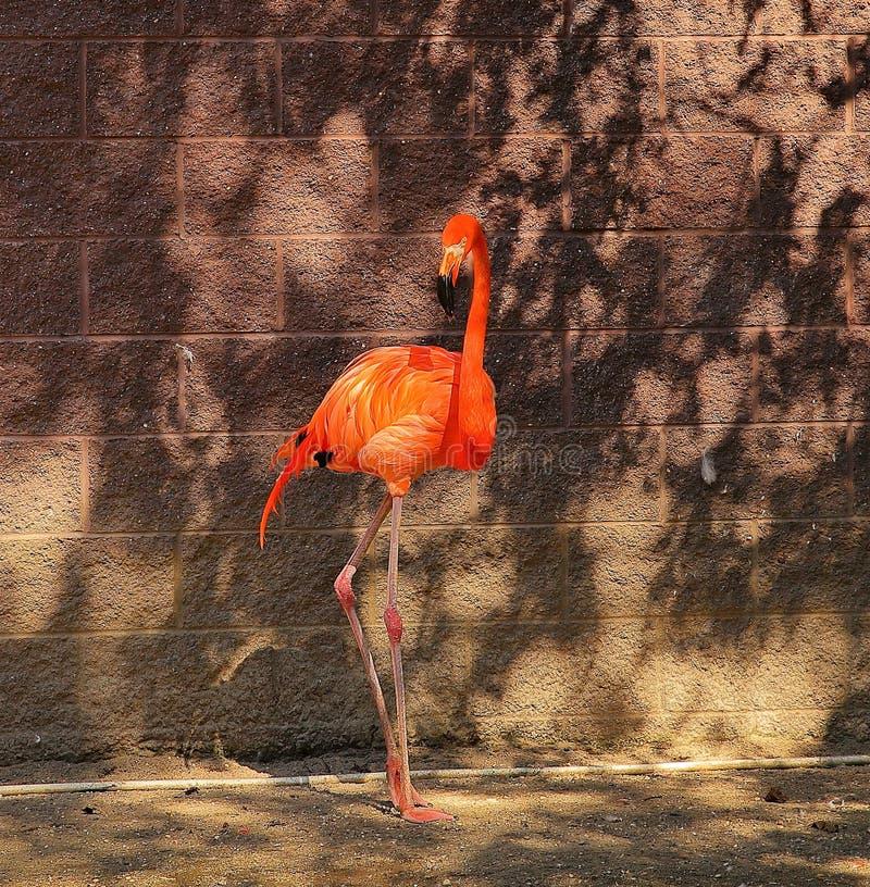 Flamingorosa färger på brand royaltyfri foto