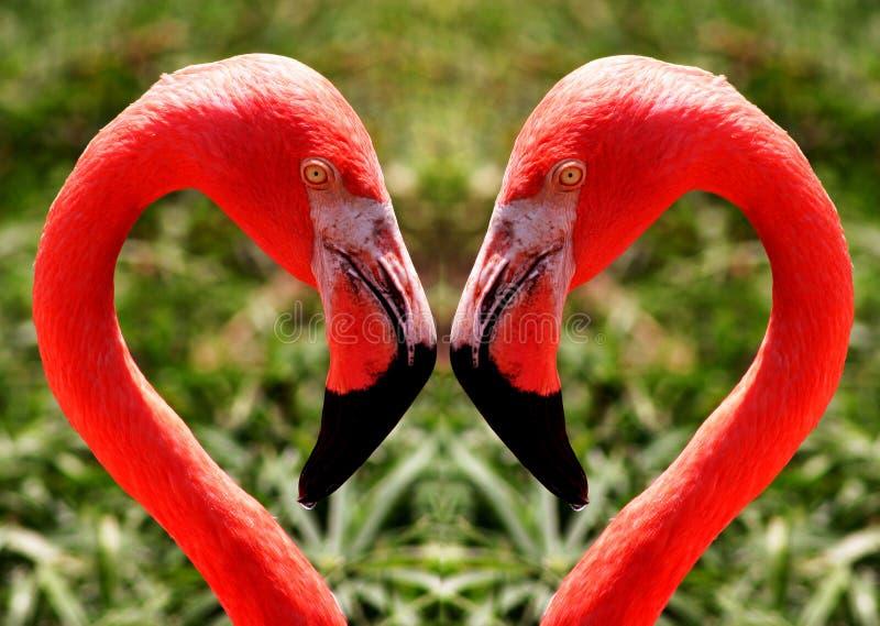 Download Flamingos stock photo. Image of park, bird, closeup, profile - 153866