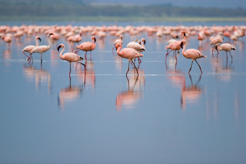 Download Flamingos stock image. Image of scenery, social, colorful - 2508505