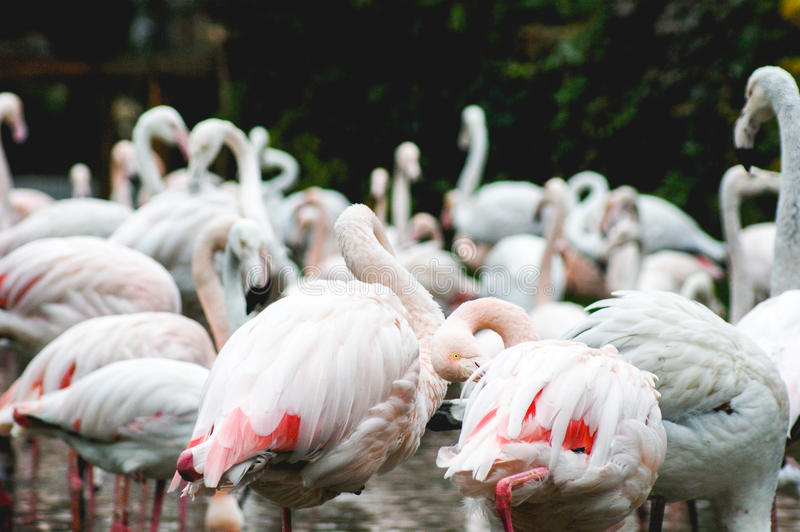Flamingos stockfotografie