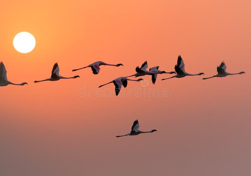 Flamingos fotografia de stock