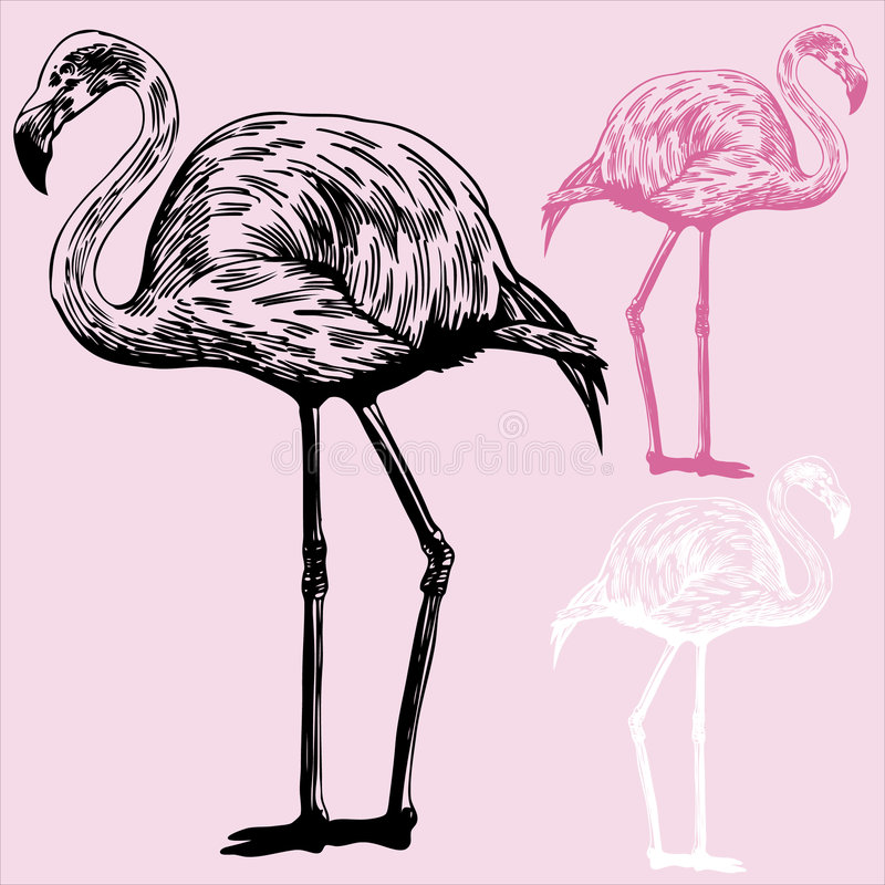 Flamingos stock illustration