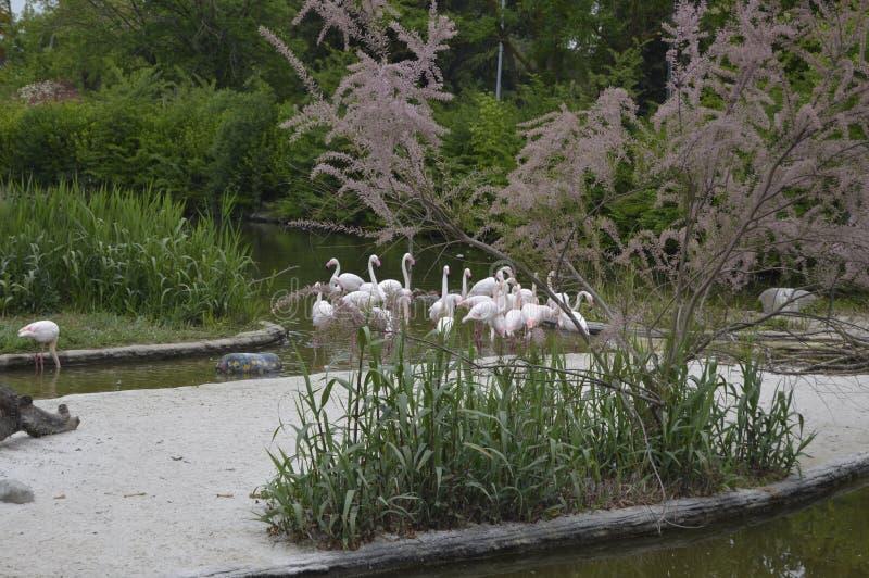 Flamingos 2 stockfotos