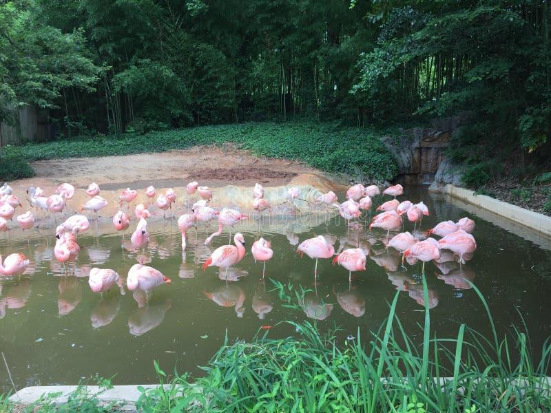 Flamingos imagem de stock royalty free