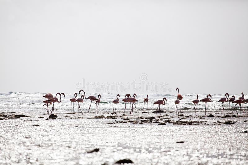 A flamingos at the beach stock images
