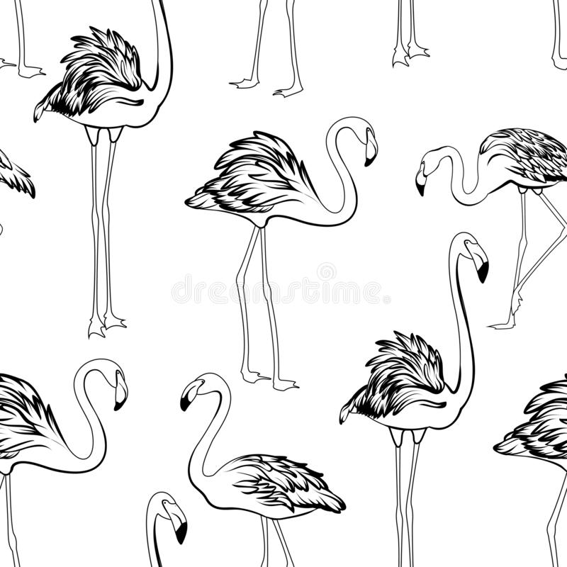 Flamingos black and white seamless pattern. Exotic wading birds in different postures. Detailed outline ink drawing. royalty free illustration