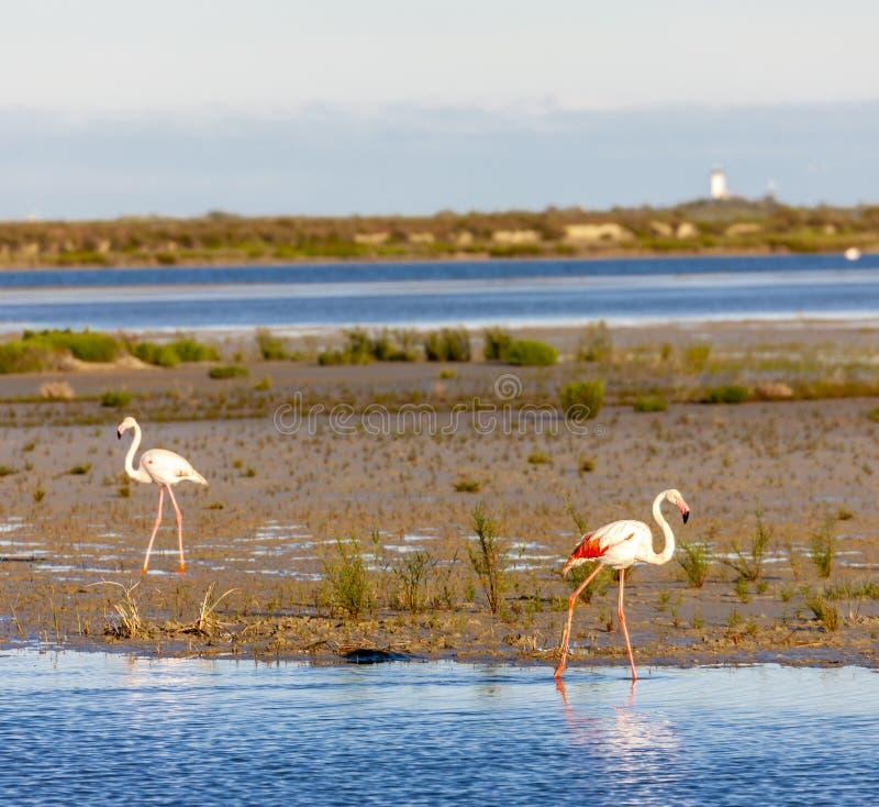 Flamingos, Camargue, Provence, Frankreich lizenzfreie stockfotografie