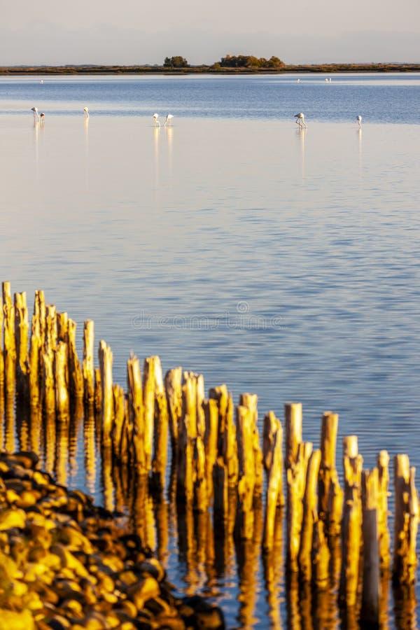 Flamingos, Camargue, Provence, Frankreich lizenzfreies stockfoto