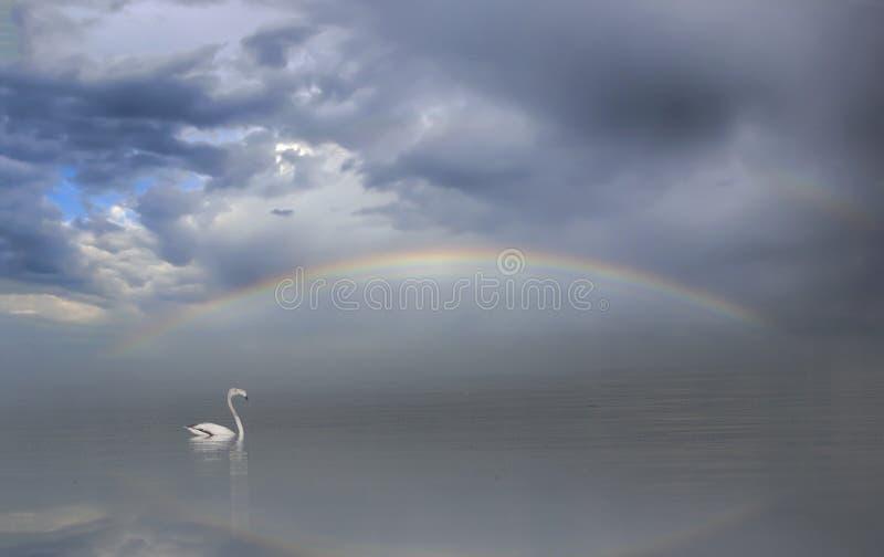 Flamingos com arco-íris imagens de stock