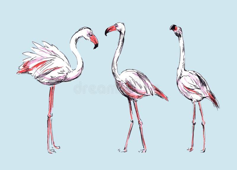Flamingos do desenho ilustração royalty free