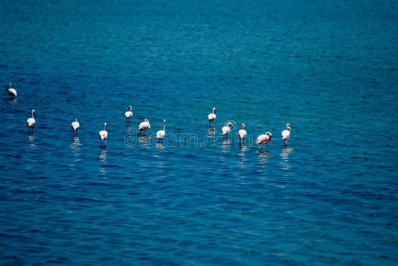 Flamingos e paisagem e reflexão bonitas no lago de sal em Turquia fotos de stock royalty free