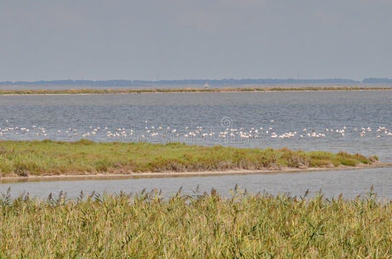 flamingos flockas pink fotografering för bildbyråer