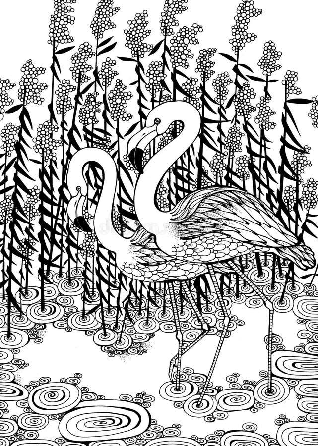 Flamingos im Wasser lizenzfreie abbildung