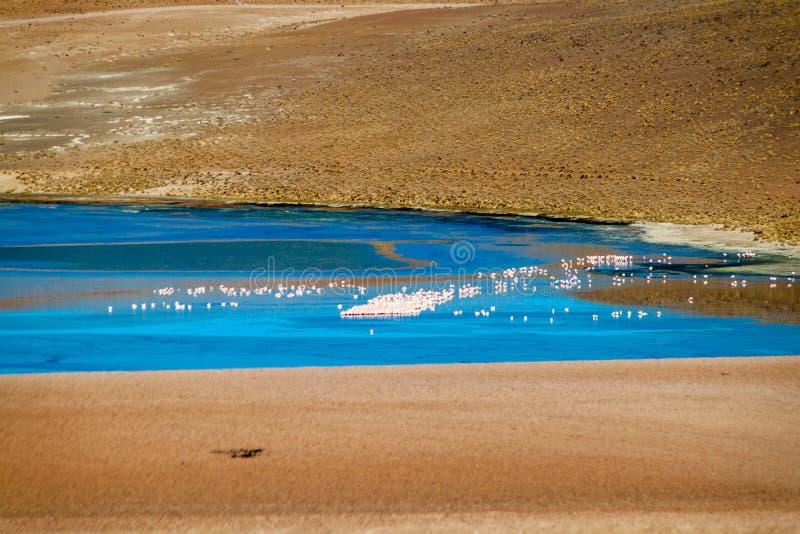 Laguna Collpa lake. Flamingos in Laguna Collpa lake on bolivian Altiplano royalty free stock images