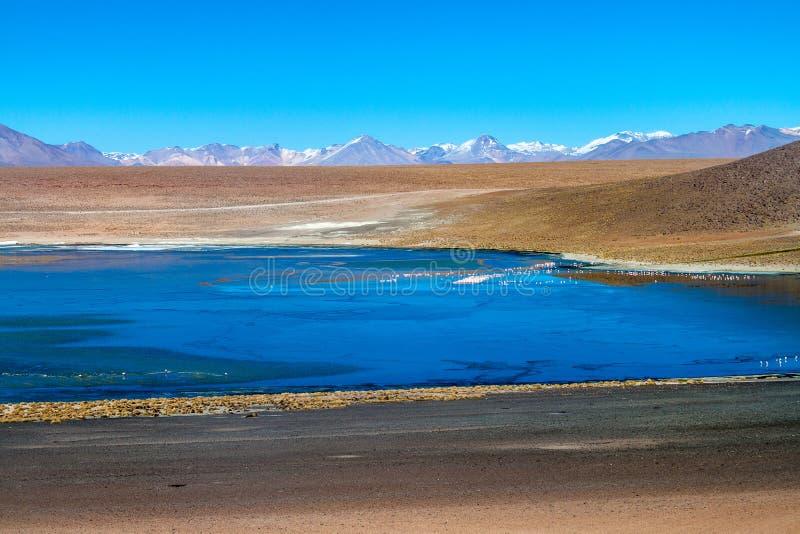 Laguna Collpa lake. Flamingos in Laguna Collpa lake on bolivian Altiplano stock photo