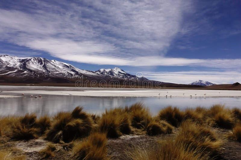 Flamingos& x27 ; lagune images libres de droits