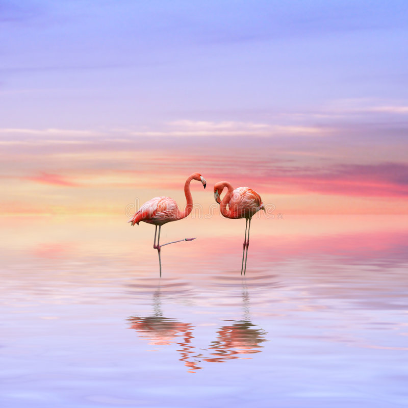 Download Flamingos love stock photo. Image of pink, soulmate, beautiful - 8425324