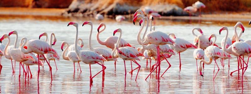 Flamingos nahe Bogoria See, Kenia lizenzfreie stockfotografie
