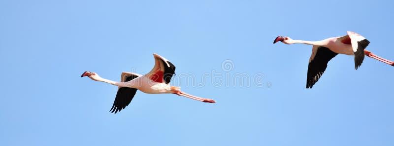 Flamingos no céu foto de stock