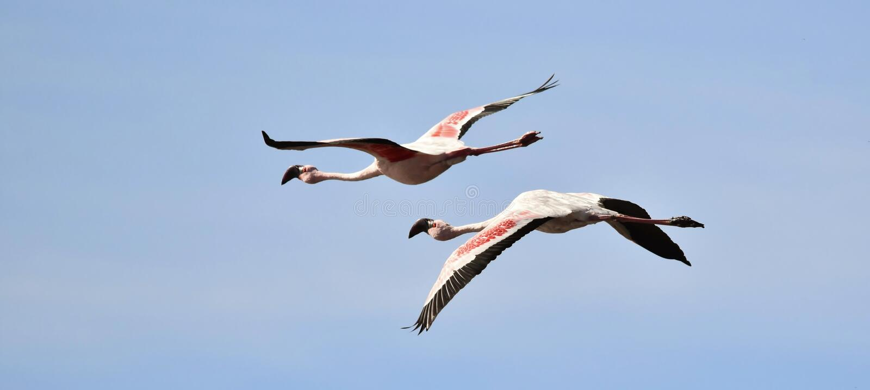 Flamingos no céu foto de stock royalty free