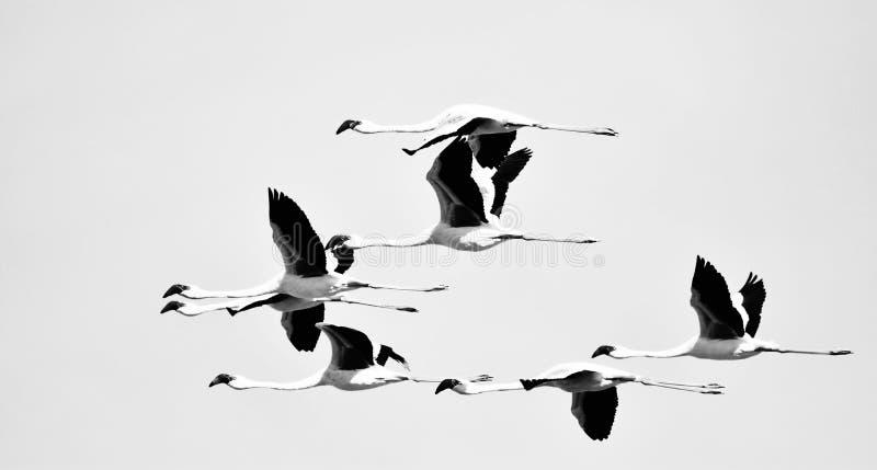 Flamingos no céu imagens de stock royalty free