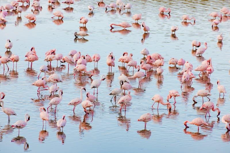 Flamingos parque nacional no lago Momela, Arusha, Tanzânia imagem de stock