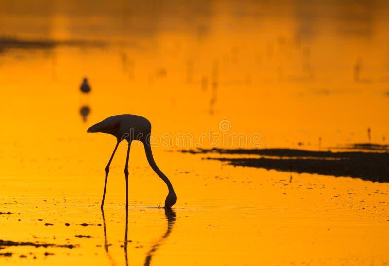 Flamingos sind schöne und gesellige watende Vögel stockbild