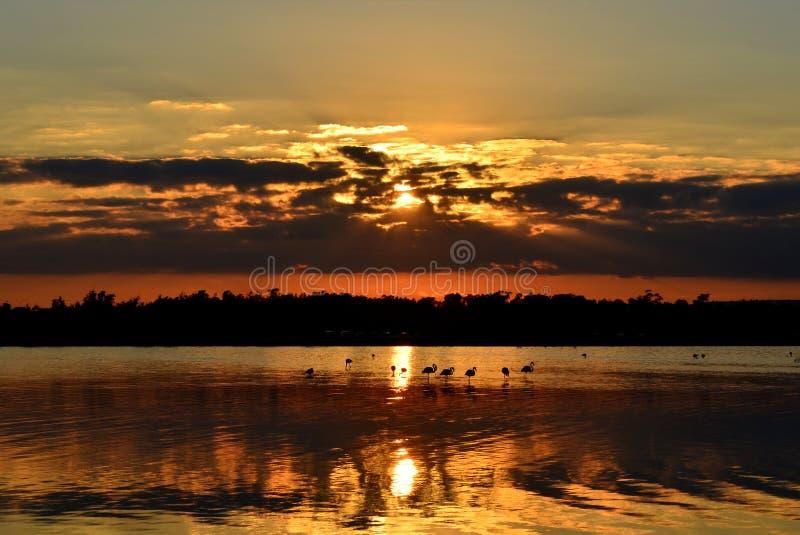 Flamingos wade in Salt Water Lake of Larnaca Cyprus at sunset royalty free stock image