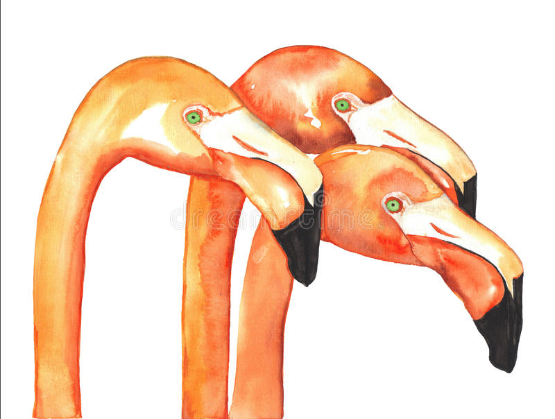 Flamingos Watercolor stock illustration