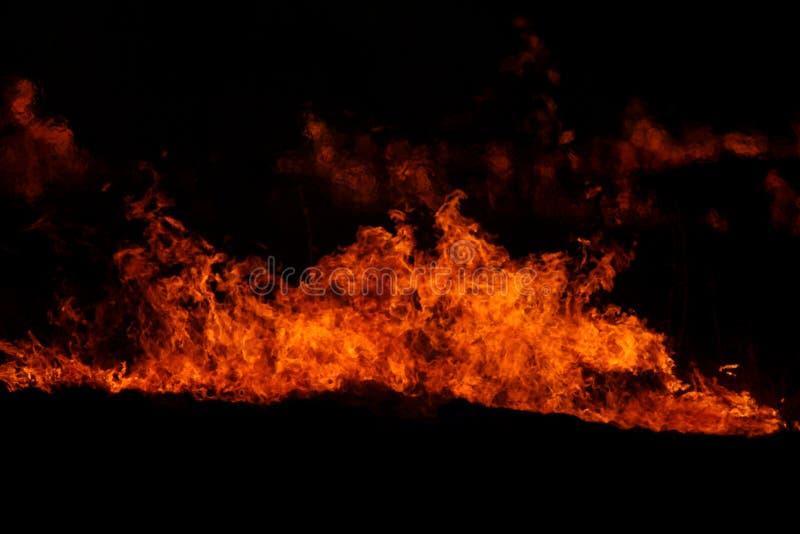 flamm red arkivbild