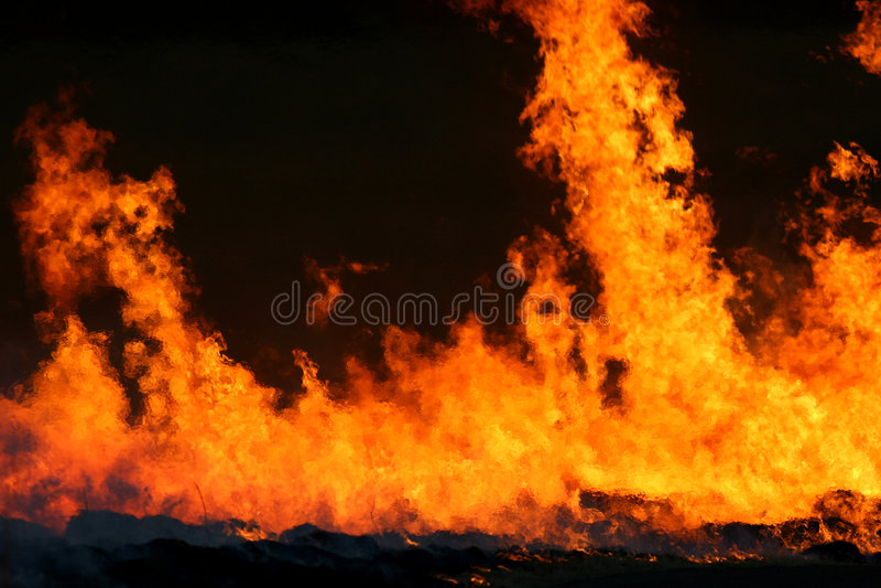 flamm red royaltyfri bild