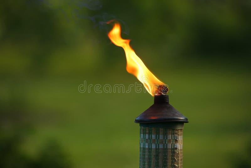 flammaträdgårdfackla royaltyfri foto