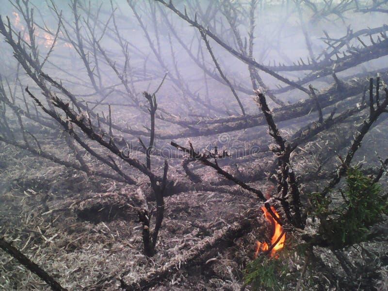 Flamme brûlée de forêt photo stock