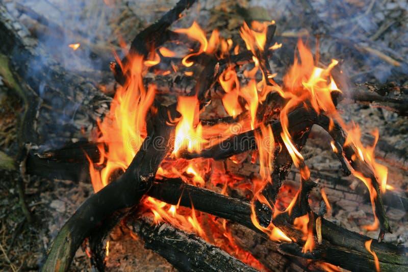 Flamme des Brennholzes im Lagerfeuer stockbilder